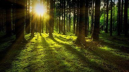 pădurea cum să slăbească